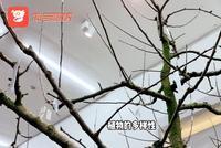 視頻(pin)一顆樹可以結出(chu)40種果子(zi),達沃斯論(lun)壇獨享
