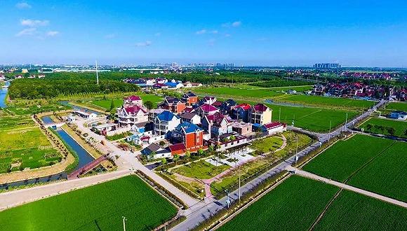"""【看长江之变】种""""母亲花""""、发展母婴产业,上海乡村致富不走寻常路"""
