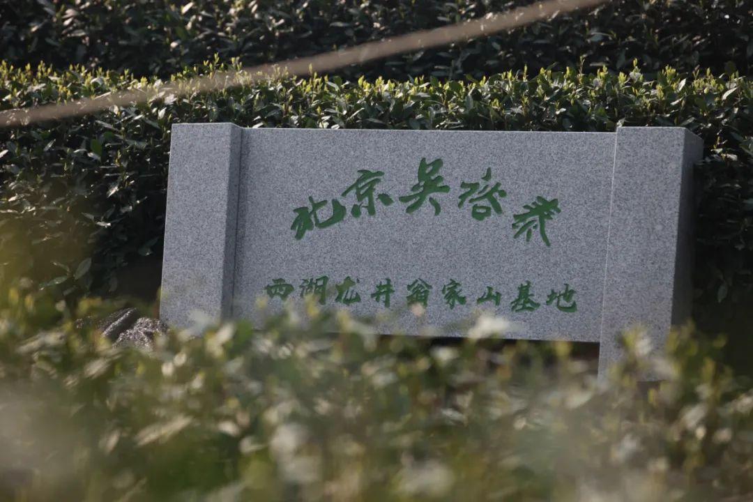 杭州兄弟搬迁 公司春日限定丨吴裕泰首批明前西湖龙井茶鲜爽上市