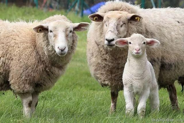 用澳洲羊毛做的休闲鞋 和手机一样轻 舒适又保暖
