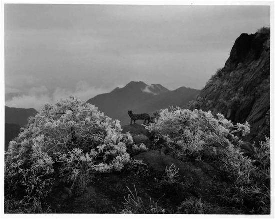 """""""挪用""""中国传统:当代摄影艺术新方向"""