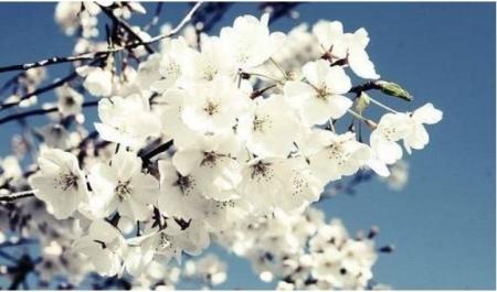 http://www.weixinrensheng.com/lishi/150576.html