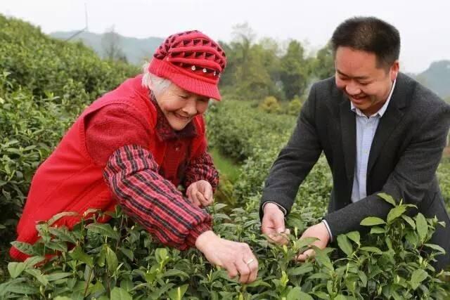 数字化为农村按下快进键 茶农首次用上支付宝区块链|区块链_LibraNews_LibraNews网