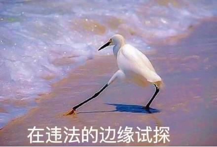 中央政法委评郑爽代孕弃养风波:钻法律空子,